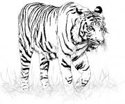 Coloriage et dessins gratuit Image de Tigre en noir à imprimer