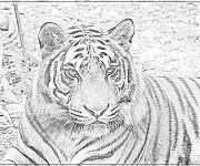 Coloriage Photo d'un Tigre en noir et blanc