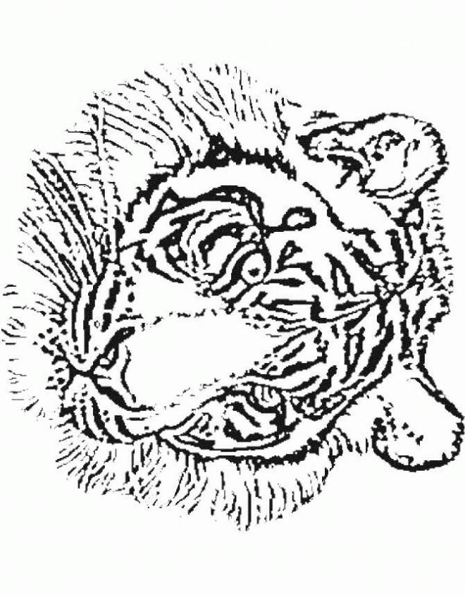 Coloriage et dessins gratuits Tête de Tigre adulte à imprimer