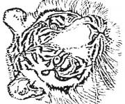 Coloriage et dessins gratuit Tête de Tigre au crayon à imprimer