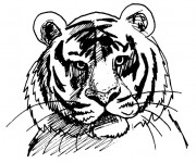 Coloriage Tête de Tigre facile