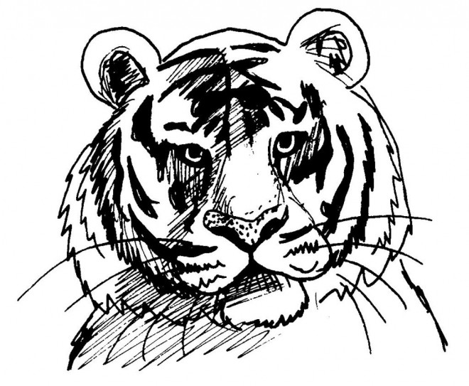 Coloriage t te de tigre facile dessin gratuit imprimer - Dessin de tigre facile ...