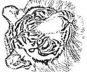 Coloriage dessin  Tigre 18
