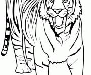 Coloriage dessin  Tigre 5