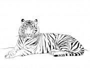 Coloriage et dessins gratuit Tigre au crayon à imprimer