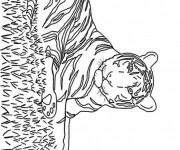 Coloriage Tigre avec rayure
