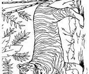 Coloriage et dessins gratuit Tigre dans la nature à imprimer