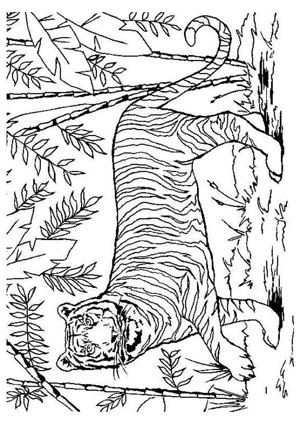 Coloriage tigre dans la nature dessin gratuit imprimer - Dessin de tigre facile ...