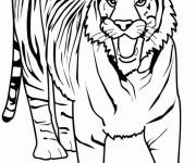Coloriage et dessins gratuit Tigre effrayant à imprimer