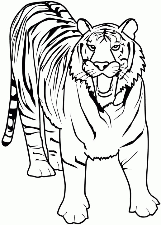 Coloriage Tigre Effrayant Dessin Gratuit à Imprimer