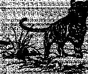 Coloriage Tigre en noir