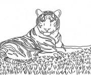 Coloriage Tigre en se reposant