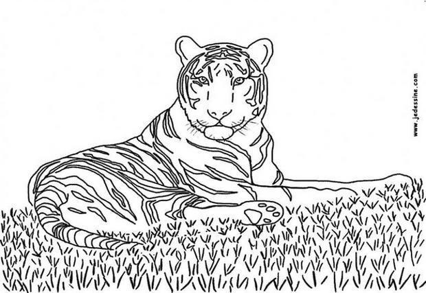 Coloriage et dessins gratuits Tigre en se reposant à imprimer