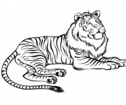 Coloriage Tigre ou Lion