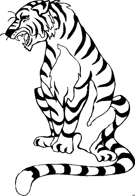Coloriage et dessins gratuits Tigre ouvrant sa bouche à imprimer
