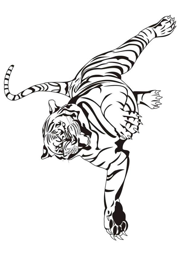 Coloriage Tigre Gratuit A Imprimer Liste 20 A 40