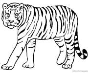 Coloriage et dessins gratuit Tigre rayé à imprimer