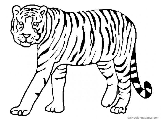 Coloriage Tigre Rayé Dessin Gratuit à Imprimer