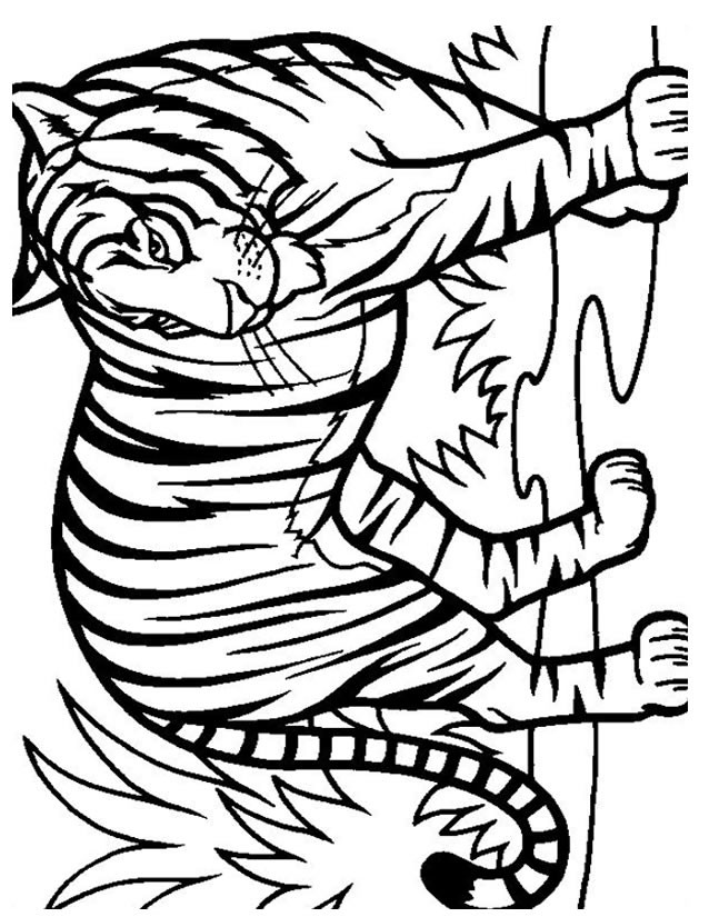 Coloriage et dessins gratuits Tigre réaliste à imprimer