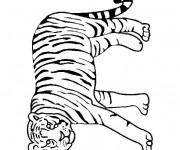Coloriage Tigre se balade
