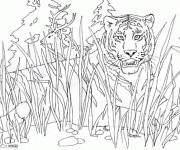 Coloriage Tigre se cache