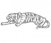 Coloriage Tigre se faufile