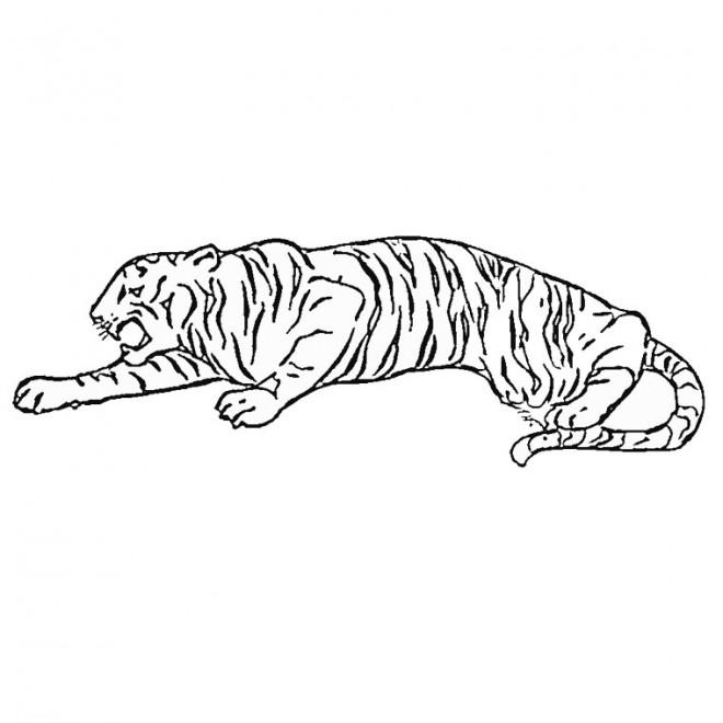 Coloriage et dessins gratuits Tigre se faufile à imprimer