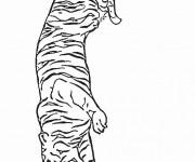 Coloriage Tigre se prépare pour chasser