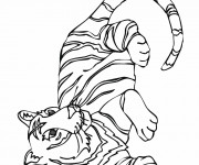 Coloriage Tigre simple