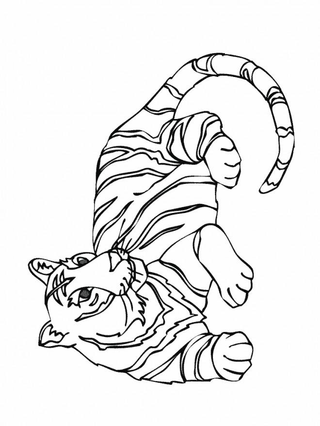 Coloriage et dessins gratuits Tigre simple à imprimer