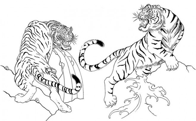 Coloriage Tigres Se Combattent Dessin Gratuit A Imprimer