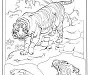 Coloriage Tigres se préparent pour la bataille