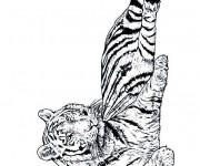 Coloriage Un beau Tigre