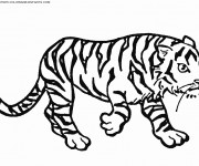 Coloriage et dessins gratuit Un Tigre qui marche à imprimer