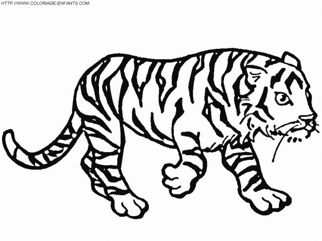 Coloriage Un Tigre Qui Marche Dessin Gratuit à Imprimer
