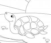 Coloriage dessin  Tortue 18