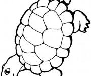 Coloriage dessin  Tortue 4