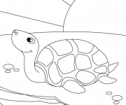 Coloriage et dessins gratuit Tortue sous le soleil à imprimer