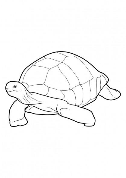 Coloriage une grande tortue dessin gratuit imprimer - Tortue a colorier ...