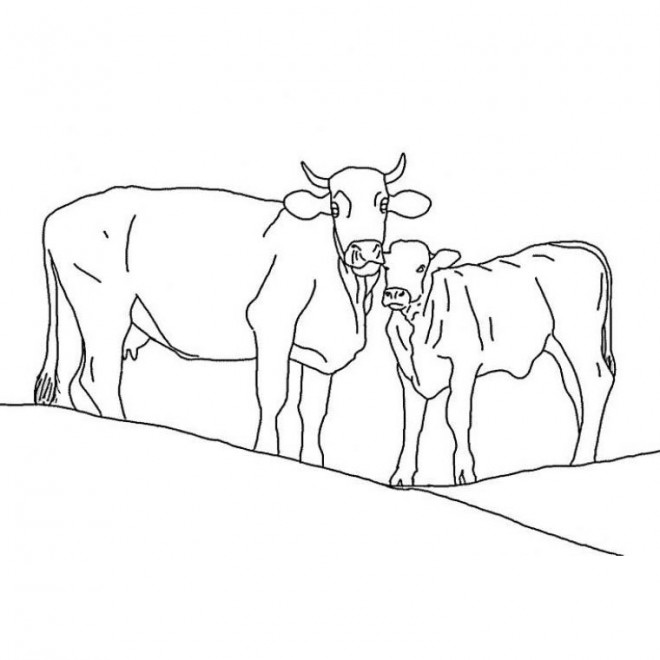 Coloriage et dessins gratuits Vache et son veau à imprimer