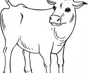 Coloriage et dessins gratuit Vache maternelle à imprimer