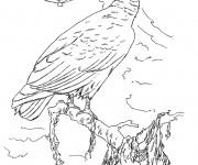 Coloriage dessin  Vautour 9