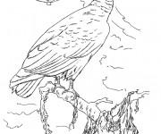 Coloriage et dessins gratuit Vautour au crayon à imprimer