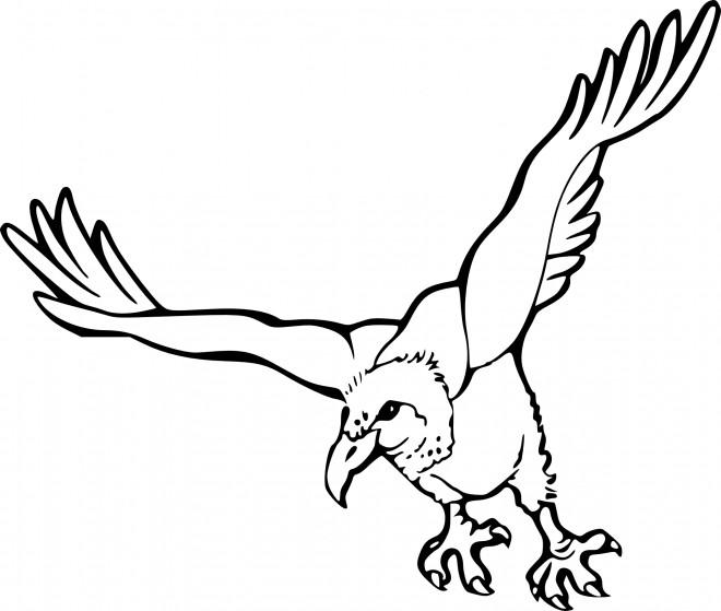 Coloriage et dessins gratuits Vautour en vol à imprimer