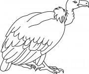 Coloriage et dessins gratuit Vautour facile à imprimer