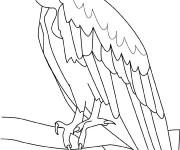 Coloriage et dessins gratuit Vautour surveille à imprimer