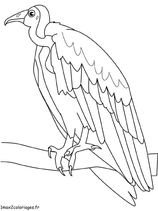 Coloriage et dessins gratuits Vautour surveille à imprimer