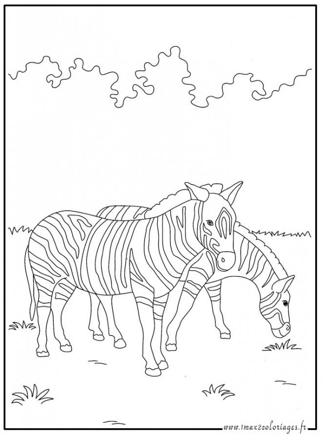 Coloriage et dessins gratuits Deux Zèbres mangent à imprimer