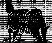 Coloriage Trois Zèbres en noir