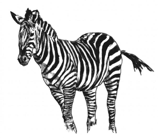 Coloriage une belle image d 39 un z bre dessin gratuit imprimer - Coloriage zebre a imprimer ...